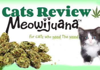 Marijuana 4 Dummies: Studies Question Sativa vs. Indica, Meowijuana Is Weed For Your Cats (10-23-17)